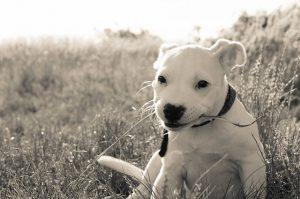 dog-837540_640