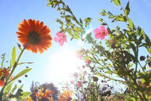 flowers-980162_640